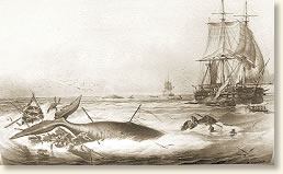 whaling1 aboard a whaling ship, 1850